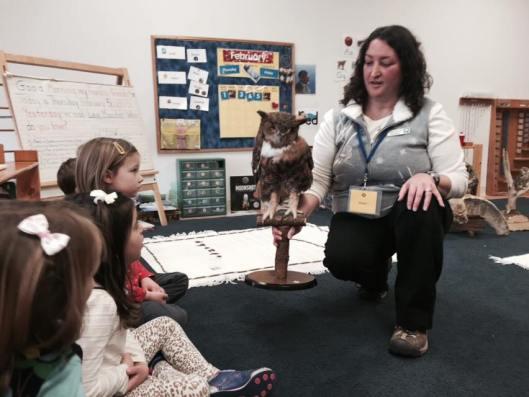Owl visitor - blog